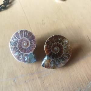 Ammonite fossil örhängen handgjorda utav mig