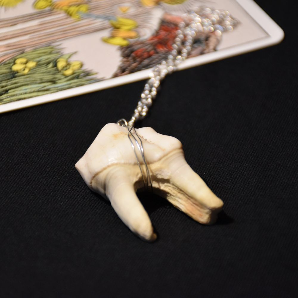 Ett maffigt halsband med silvrig kedja och en tand (blekt och rengjord) från älg! . Accessoarer.