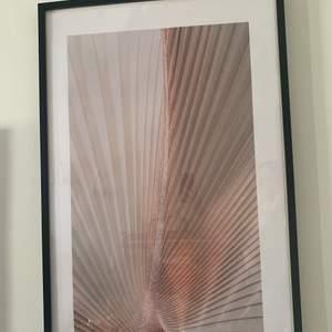 """Olika posters/affischer. Säljer inte ramarna.  Poster """"rosa växt"""" 60x90. Nypris 268. Säljes för 180 kr.🍦"""