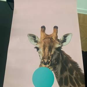 """Olika posters/affischer. Säljer inte ramarna.  Poster """"giraff"""" 60x90. Nypris 268. Säljes oxå för 180 kr."""