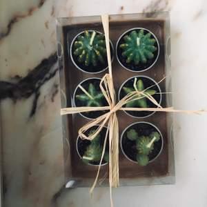 Världens sötaste paket med små kaktus ljus !!! Perfekt som present, eller varför inte som inredning i rummet. Den består av 6 kaktus ljus med små krukor och är i oöppnat paket jag fick för längesedan, så går ej att köpa någonstans. Unika o söta :)