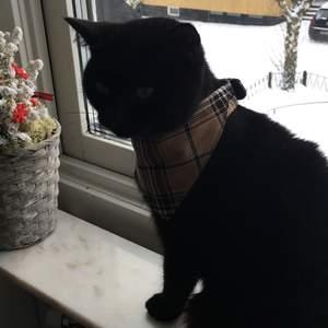 Helt ny hundhalsband med att rutigt mönster jätte fint och lite klassiskt, passar bra om man vill se lite snygg ut när man är på stan🐶 har dok ingen hund så min katt är model 😂