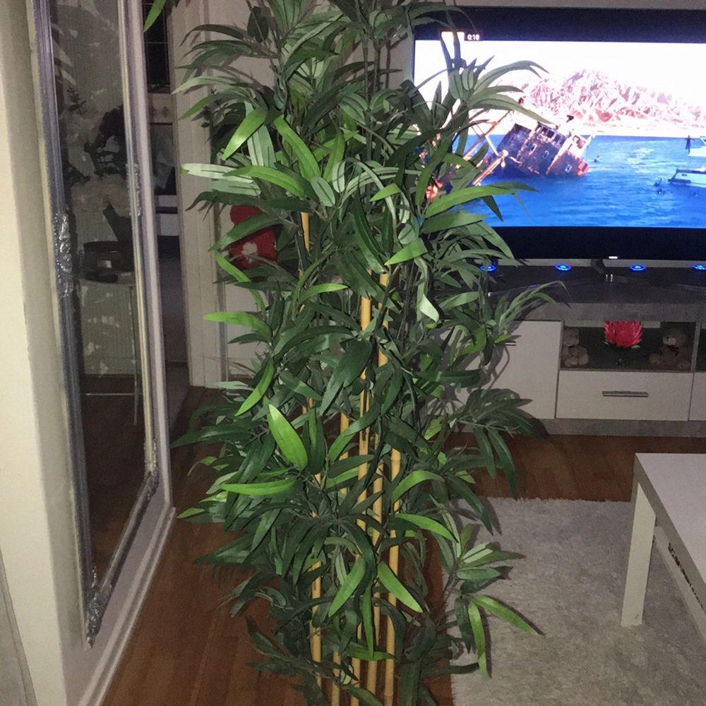 Den är 180 cm lång ungefär! För 600 så ingår krukan men vill du bara ha växten är det 300 som gäller! Den är i fint skick, inga konstigheter . Övrigt.