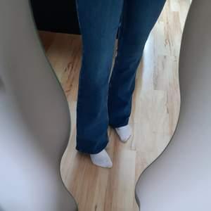 Helt nya bootcut jeans från cubus, med lapparna kvar. Jag är 173/174 cm lång och dom når nästan hela vägen ner till golvet för mig.