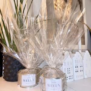 Vi på WeLux UF säljer veganska, miljövänliga doftljus i återvunna konservburkar!🕯✨ Du bestämmer själv doft, etikett, storlek på burken samt om den ska vara guldig/silvrig. En perfekt julklapp helt enkelt!🎅🏼Beställ här eller kolla in vår Instagram @welux.uf för mer information❤️